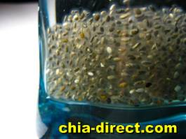 lose weight thru soluble fiber chia seeds
