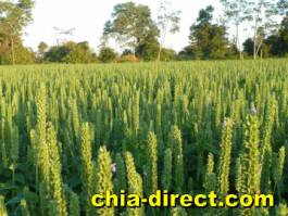 crop field at chia-direct.com
